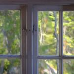 Autumn forest window